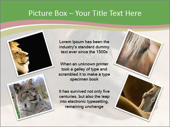 Big Pig PowerPoint Templates - Slide 24