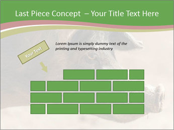 Big Pig PowerPoint Templates - Slide 46