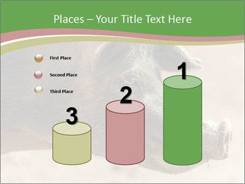 Big Pig PowerPoint Templates - Slide 65