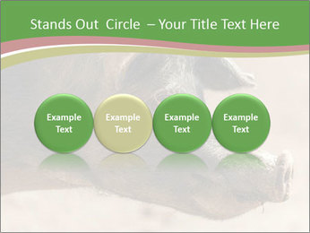 Big Pig PowerPoint Templates - Slide 76