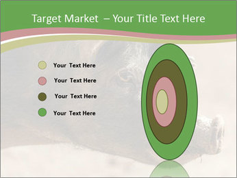 Big Pig PowerPoint Templates - Slide 84