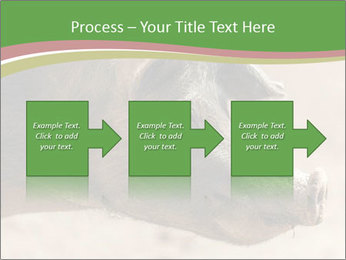 Big Pig PowerPoint Templates - Slide 88