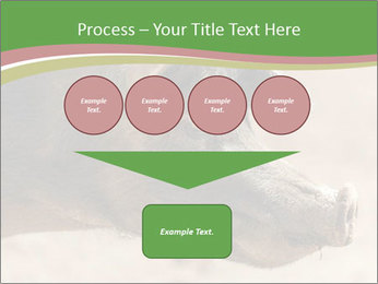 Big Pig PowerPoint Templates - Slide 93