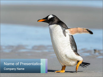 Funny Penguin PowerPoint Template - Slide 1