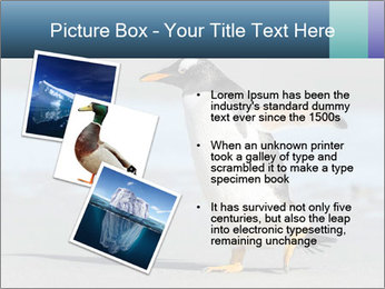 Funny Penguin PowerPoint Template - Slide 17