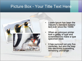 Funny Penguin PowerPoint Template - Slide 20