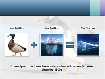 Funny Penguin PowerPoint Template - Slide 22