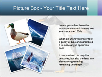 Funny Penguin PowerPoint Template - Slide 23