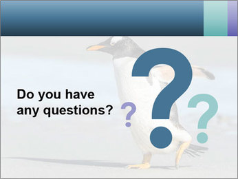 Funny Penguin PowerPoint Template - Slide 96