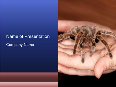 Venomous Spider PowerPoint Template