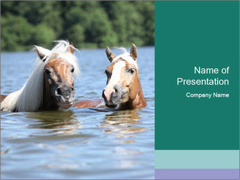 Two Horses In water PowerPoint Template - Slide 1