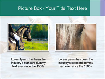 Two Horses In water PowerPoint Template - Slide 18