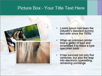Two Horses In water PowerPoint Template - Slide 20