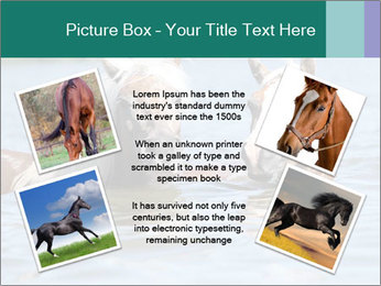 Two Horses In water PowerPoint Template - Slide 24