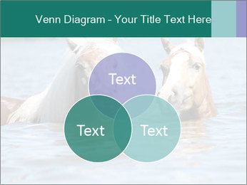 Two Horses In water PowerPoint Template - Slide 33