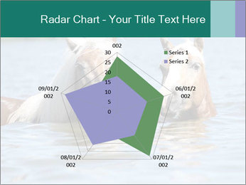 Two Horses In water PowerPoint Template - Slide 51