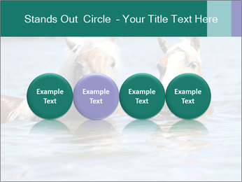 Two Horses In water PowerPoint Template - Slide 76