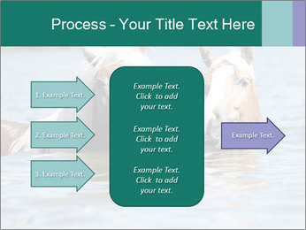 Two Horses In water PowerPoint Template - Slide 85