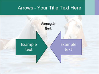 Two Horses In water PowerPoint Template - Slide 90