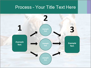 Two Horses In water PowerPoint Template - Slide 92