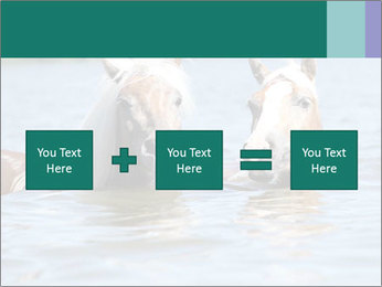 Two Horses In water PowerPoint Template - Slide 95