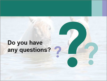 Two Horses In water PowerPoint Template - Slide 96