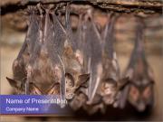 Wild Bats PowerPoint Templates