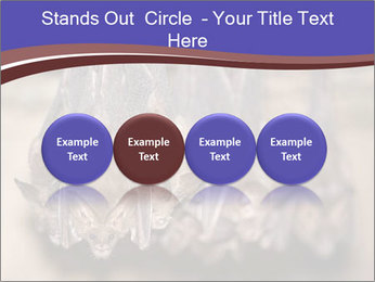 Wild Bats PowerPoint Template - Slide 76