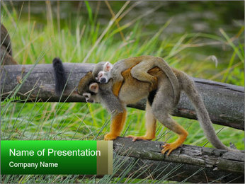 Monkey With Baby PowerPoint Template - Slide 1