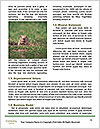 0000090314 Word Template - Page 4