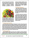 0000090315 Word Templates - Page 4