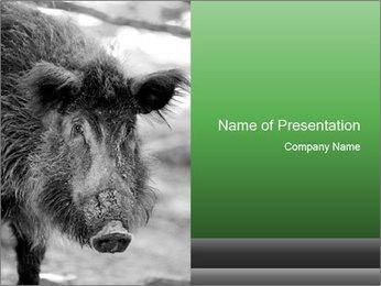 Wild Pig PowerPoint Template