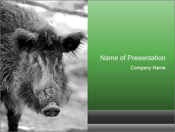 Wild Pig PowerPoint Templates - Slide 1