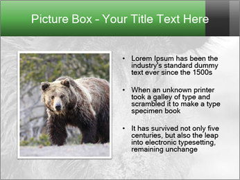 Wild Pig PowerPoint Templates - Slide 13