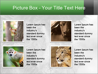 Wild Pig PowerPoint Templates - Slide 14