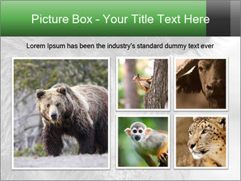 Wild Pig PowerPoint Templates - Slide 19