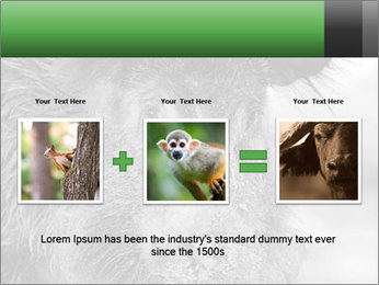Wild Pig PowerPoint Templates - Slide 22