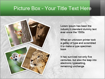 Wild Pig PowerPoint Templates - Slide 23