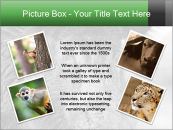 Wild Pig PowerPoint Templates - Slide 24