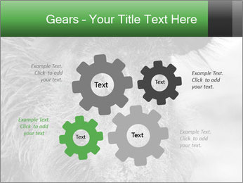 Wild Pig PowerPoint Templates - Slide 47