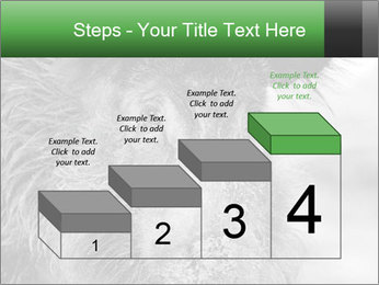 Wild Pig PowerPoint Templates - Slide 64