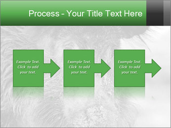 Wild Pig PowerPoint Templates - Slide 88