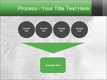 Wild Pig PowerPoint Templates - Slide 93