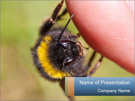 Macro Bee PowerPoint Templates