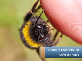 Macro Bee PowerPoint Template - Slide 1