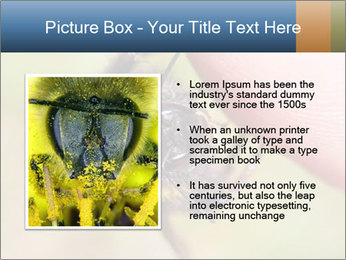 Macro Bee PowerPoint Template - Slide 13