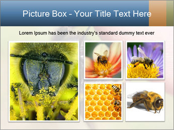 Macro Bee PowerPoint Template - Slide 19