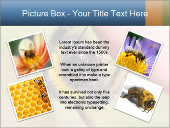 Macro Bee PowerPoint Template - Slide 24