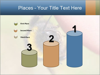 Macro Bee PowerPoint Templates - Slide 65