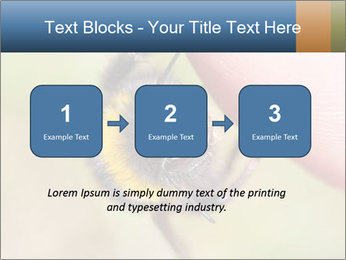 Macro Bee PowerPoint Template - Slide 71